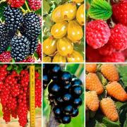 Buy berry plants. Buy seedlings of fruit-berry cultures