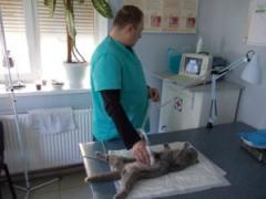 Вызов ветеринара на дом, Харьков